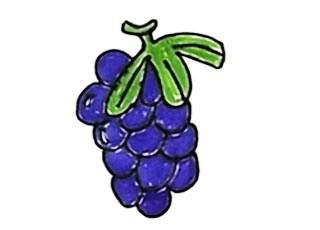 葡萄简笔画怎么画