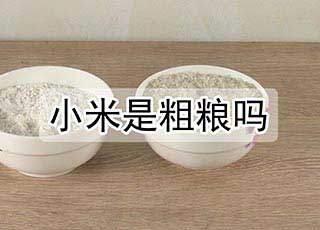小米是粗粮吗